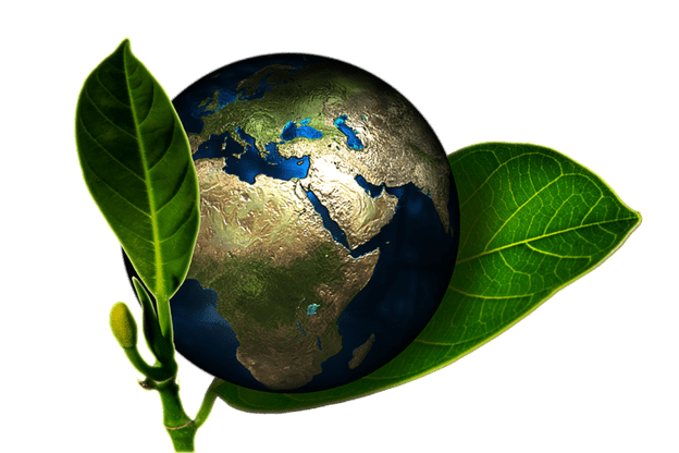How to Make Your Home More Environmentally Friendly: 7 Tips